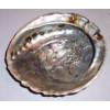 Abalone Schelp (L)